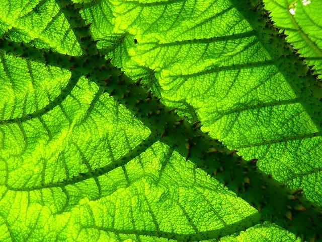 Une for t comestible qu 39 est ce que c 39 est permaculture - La permaculture c est quoi ...