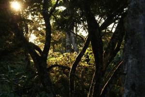 jungle forêt comestible