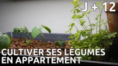Cultiver ses légumes en appartement