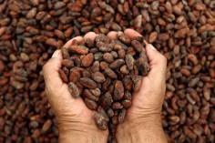 bienfaits-cacao