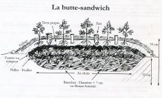 Photo de coupe d'une butte de culture sandwich