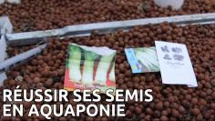Semis en aquaponie