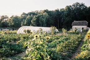Offre de postes Chef de culture et ouvrier agricole