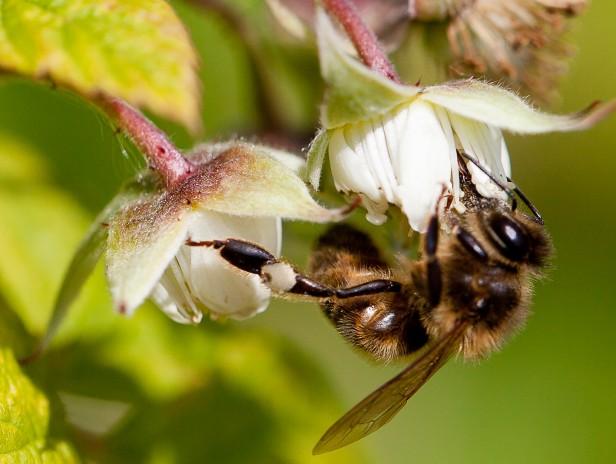 journée d'initiation à l'apiculture naturelle, conduite d'un rucher en Warré.