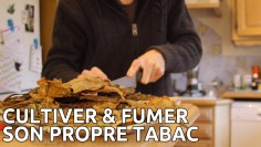 cultiver-tabac