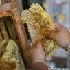 récolte du miel en apiculture naturelle