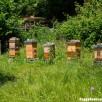 mon petit rucher en Warré