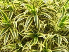 Les plantes qui purifient votre intérieur