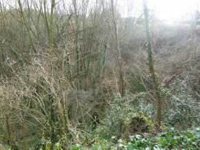 création d'une forêt comestible