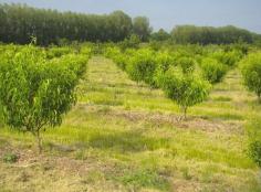 vergeragroforestier