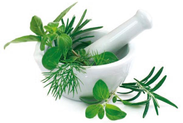 plante m dicinales et plantes utiles permaculture
