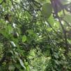 Listes de plantes par rusticités