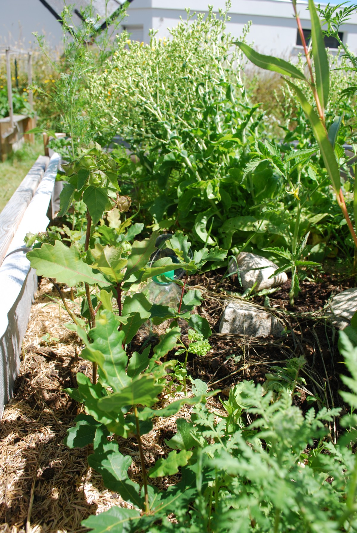 Jardin juillet 2014 permaculture for Jardin permaculture 2015