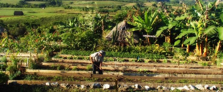 L'agroécologie pérène à Cuba