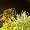 apiculture et ruche