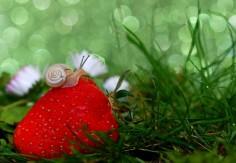 La gelée de printemps aux fraises