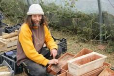 Tomates sans eau ni pesticide : cette méthode fascine les biologistes