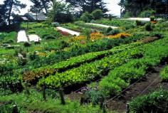 Permaculture : cet art de vivre qui nous veut du bien