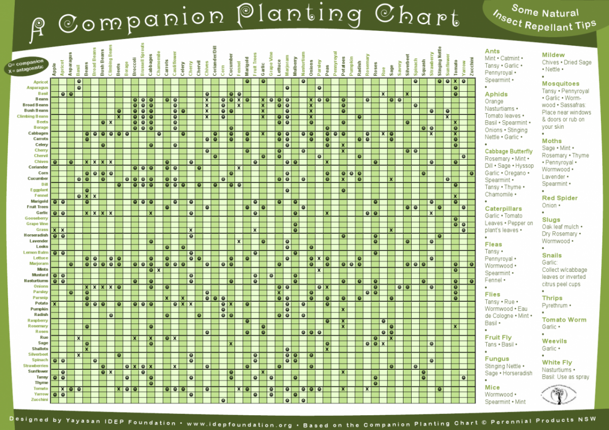 Top Liste d'associations de plantes (2) - Permaculture QQ18