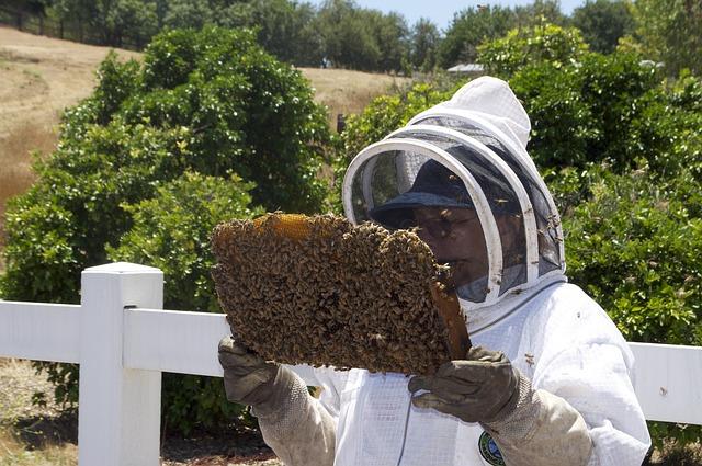honey-109001_640