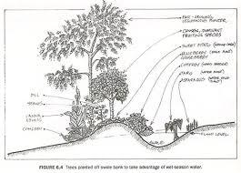Début de forêt commestible(niveau expert)