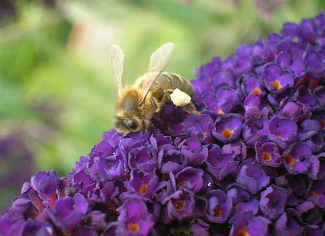 Rencontre sur l'utilité des abeilles dans nos villages