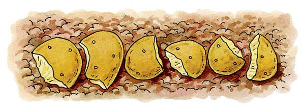 le secret pour des récoltes énormes de pommes de terre - permaculture