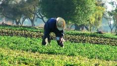 salvador fermier permaculteurs