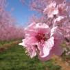fleur permaculturelle