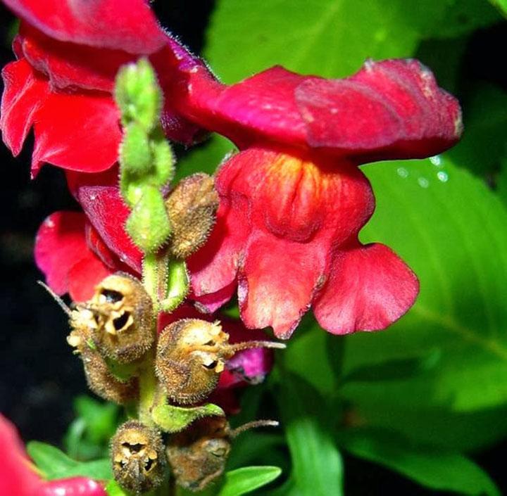 fleur crane2