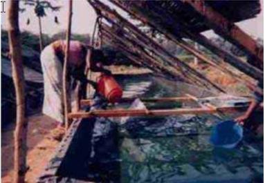 Filtration à la Coopérative Agro-Piscicole de N'dress, Bangui (RCA), 1995