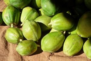 permaculture dossier spiruline (9)