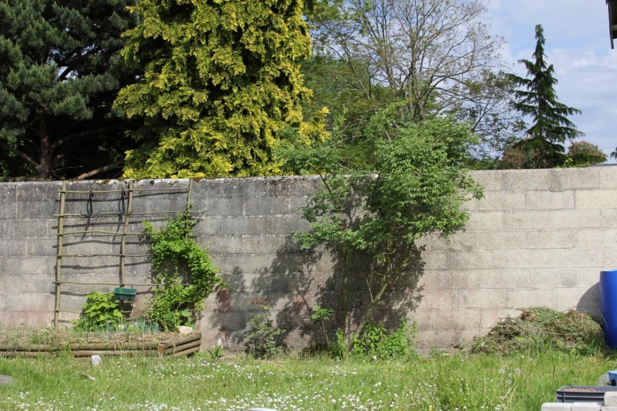des petits pois vont venir s 39 accrocher au mur permaculture. Black Bedroom Furniture Sets. Home Design Ideas