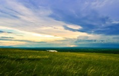 plantes des prairies (2)