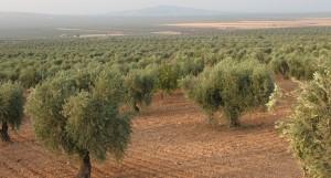 terre fertile jospeh pousset (1)