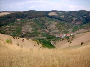 terre fertile jospeh pousset (2)