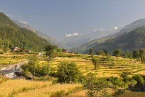 terre fertile jospeh pousset (3)