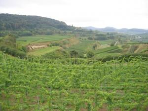 terre fertile jospeh pousset (5)