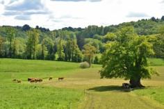 terre fertile jospeh pousset (6)