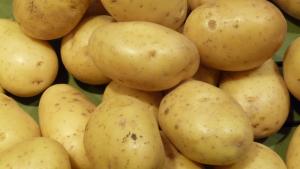 culture pomme de terre (1)