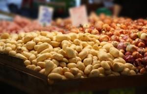culture pomme de terre (4)