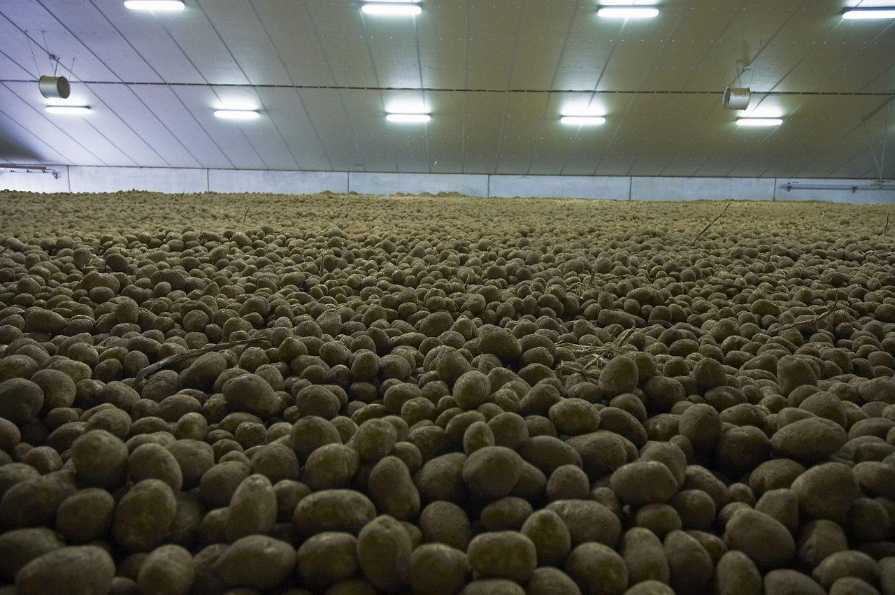 Biodoc 5 culture de la pomme de terre permaculture - Boite conservation pomme de terre ...