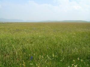 Semer des prairies à base de mélanges d'espèces (3)