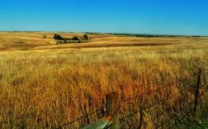 Semer des prairies à base de mélanges d'espèces (6)