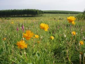 Semer des prairies à base de mélanges d'espèces (7)