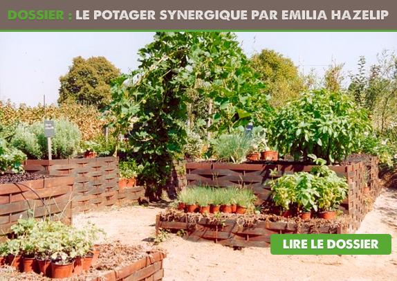 Dossier le potager synergique emilia hazelip for Jardin permaculture 2015