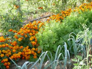 Généraliser une agriculture écologique (1)