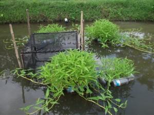 Généraliser une agriculture écologique (3)