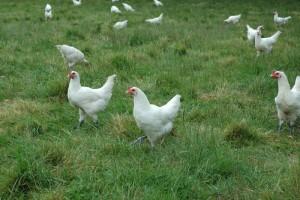 Généraliser une agriculture écologique (5)