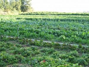 Généraliser une agriculture écologique (7)